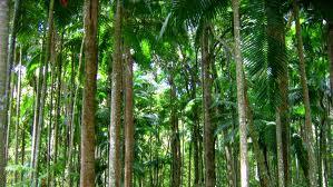 madera conciencia ecologica